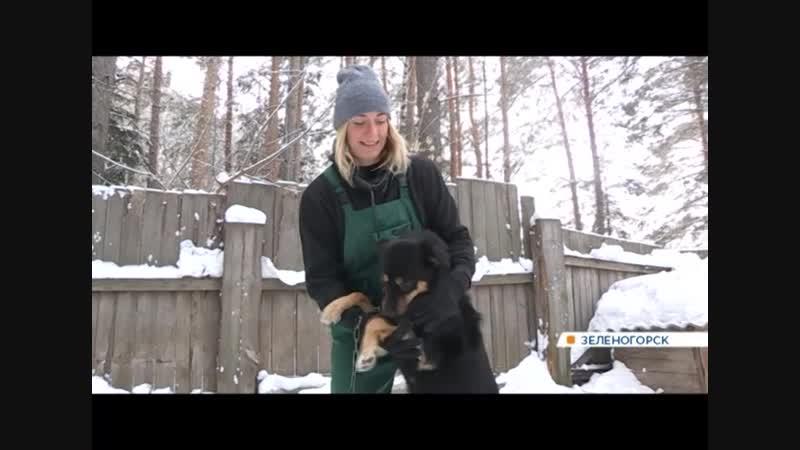 Зеленогорская собака-футболистка нашла временное пристанище в приюте для животных