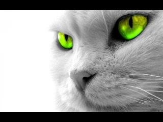 BBC [Очевидец] - Кошки (1 серия)