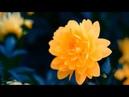 ♫ Músicas Excelentes para Relaxar - Transmite Muita paz - Piano Suave.