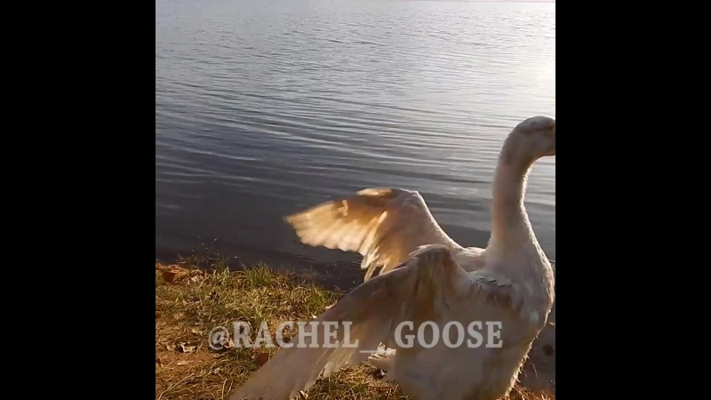 Рейчел посмотрела на озера и срулила. Сказала Вы с ума сошли