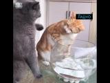 Два котика и рыбка