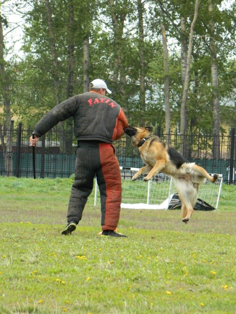 Русский ринг 24.05.14 Новосибирск RerDvuSKD_0