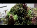 Mount Fuji Aquascape UNS 45S buceplant