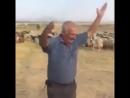 АЗЕРБАЙДЖАНСКИЙ ПАСТУХ ТОЖЕ В ТРЕНДЕ 2018 Азербайджан Azerbaijan Azerbaycan БАКУ BAKU BAKI Карабах 2018 HD