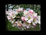 Детская песня о Весне..mp4