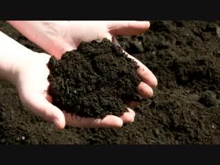 Обработка сада от вредителей и болезней -Дачники