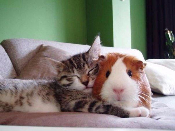 Яркие и необъяснимые примеры дружбы животных!
