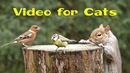 Videos for Cats and Dogs : 8 Hours of Birds and Squirrel Fun NEW ✅