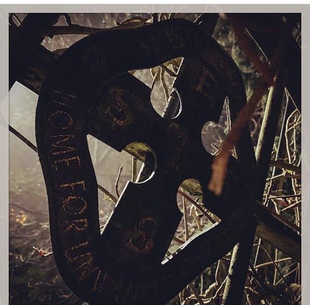 Том Харди поделился парой фото со съемок нового «Венома»