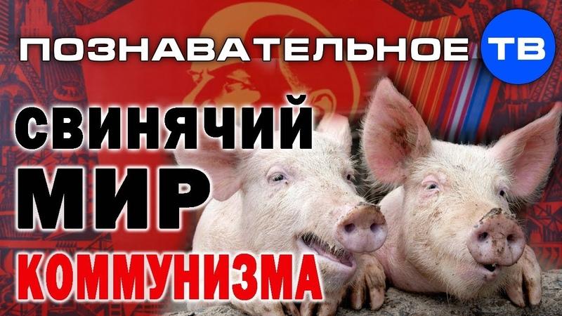 Свинячий мир коммунизма. Как исчезли управленцы (Познавательное ТВ, Олег Чагин)