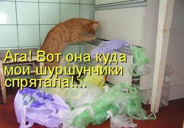 http://cs14109.vk.me/c616019/v616019447/4cca/F5JkFLPJke0.jpg