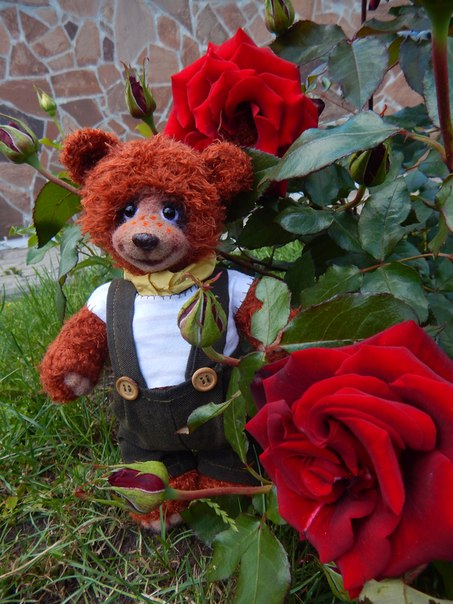 Рыжий,честный…и влюбленный (5 фото) - картинка