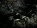 1989 Борнео Призрак морской черепахи - Подводная одиссея команды Кусто