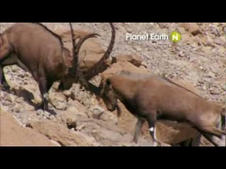 Viasat Nature Eastern Europe - Planet Earth promo