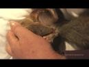 Роды домашней белочки Genera of squirrel Sasha Geburt Eichhörnchen