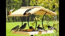 20 Easy and Beautiful Bird Feeder Crafts (homemade)