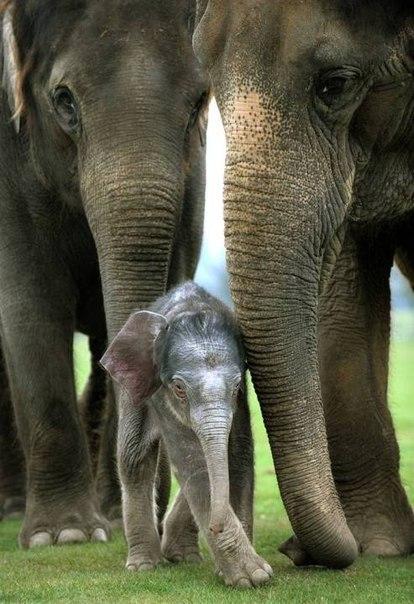 Мать и дитя в мире животных.))))))