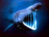 Незабываемые животные морских глубин. Документальный фильм в хорошем качестве!