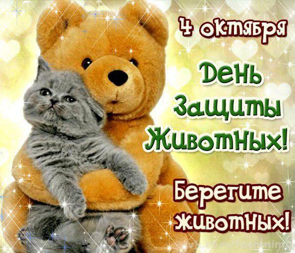 http://cs620324.vk.me/v620324782/1a173/B_8b4aDp3yA.jpg