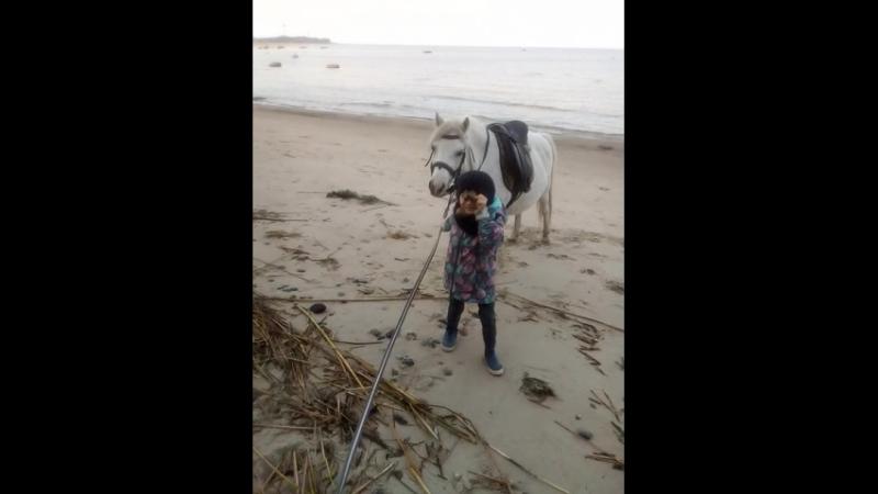 помыли копытца в заливе