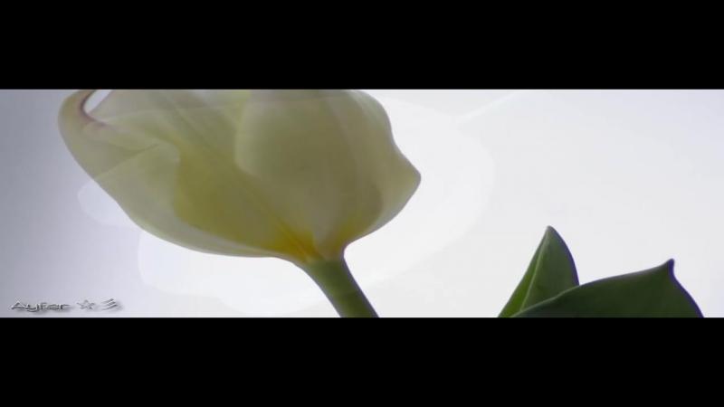 50.HASAN IBISH - Keman enstrumental ☆彡