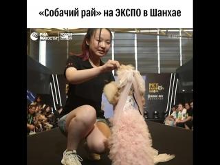 Выставка собак в Шанхае