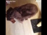 Как собаки встречают своих хозяев