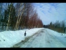 глухарь на дороге