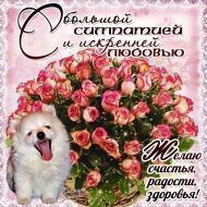 Поздравления С днем Рождения Привет