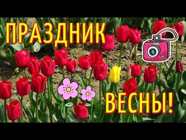 США 3: Тюльпановые поля в АМЕРИКЕ / Фестиваль тюльпанов в США