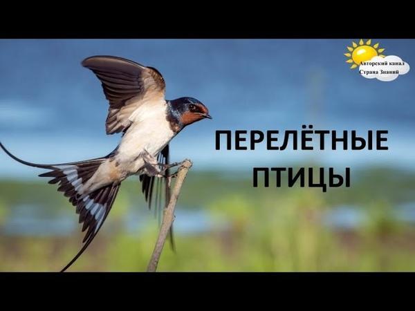 Перелётные птицы. Загадки, стихи. Окружающий мир.