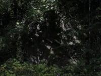 Путеводитель по гротам и рощам Guide to Grottoes Groves 2015 Тоби Татум Toby Tatum