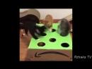 ПОПРОБУЙ НЕ ЗАСМЕЯТЬСЯ - Смешные Приколы и фейлы с Животными до слез, смешные ко
