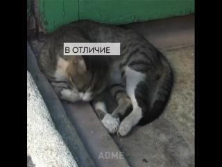 Немного о котиках