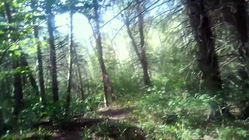 Куда ведёт туевая аллея Курортного парка в Кисловодске
