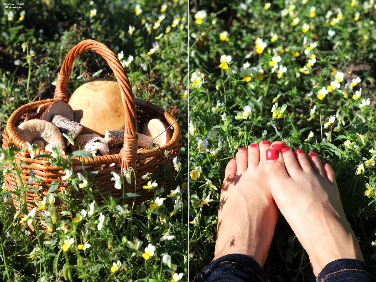 эротические рассказы как я ходил с маленькой девочкой по грибы