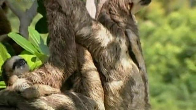 Ленивец Седьмой смертный грех Sloth The 7th Deadly Sin 2001