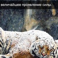 Анкета Андрей Галузин