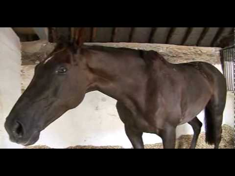 Denman - Before he was famous
