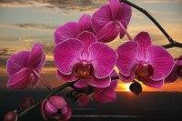 Количество схем: 34, Описание: Схемы вышивки крестом с орхидеями.  Автор: разные авторы, Формат: xsd,jpeg,pdf, Жанр...
