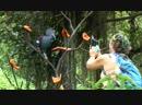 Kuala Lumpur 2015 Парк птиц Пещеа Batu
