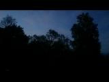 звонкая ночная птица