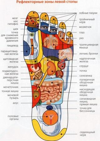 С точки зрения биомеханики стопа имеет функционально целесообразное анатомическое строение, поэтому от ее состояния...