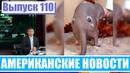 Hack News Американские новости Выпуск 110
