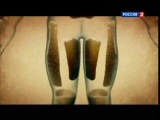 Наука 2 0  Большой скачок  Жировая клетка 2012