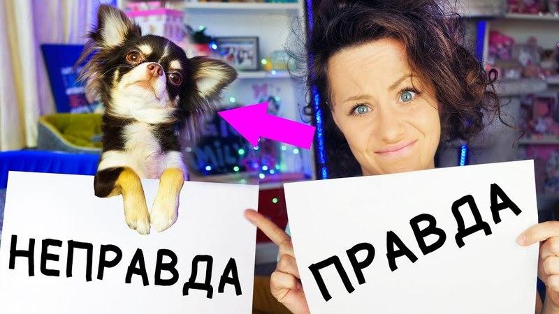 Мои собаки КУСАЛИ ДЕТЕЙ ДРАЛИСЬ и КАКАЛИ в МАГАЗИНЕ? БЫЛО НЕ БЫЛО МОИ ИСТОРИИ | Magic Family » Freewka.com - Смотреть онлайн в хорощем качестве