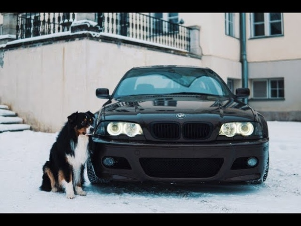 On a new level | E46 330ci dogs 4K
