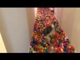 Самая счастливая собака на свете))