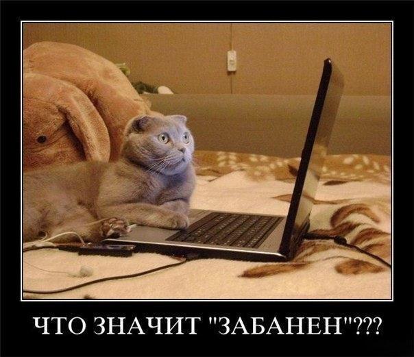 Кошачий юмор - Страница 4 SU79u5UG1rQ