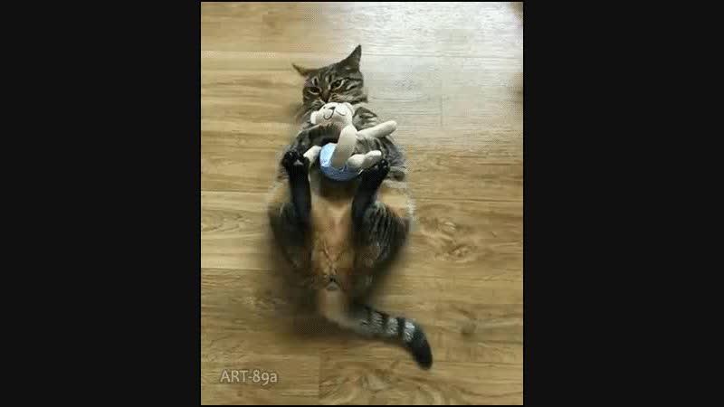 Cat bunny kicking his Teddy Bear then trowing it at his human haha